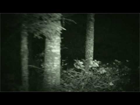 Sasquatch sighting zigzag oregon best ufo sightings february 2013
