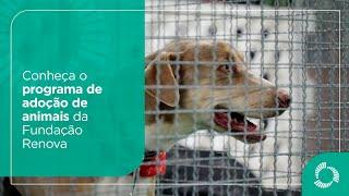 Conheça o programa de adoção de animais