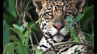 jaguar-lodge-pantanal-brasilien