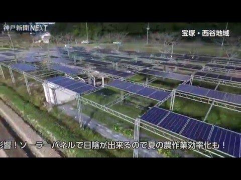 ソーラーシェアリング~農と発電を両立~