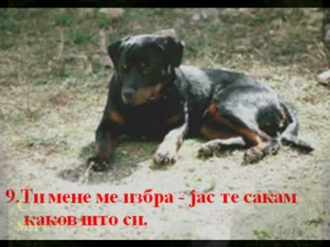 Молбите на едно куче - Dog Wishes