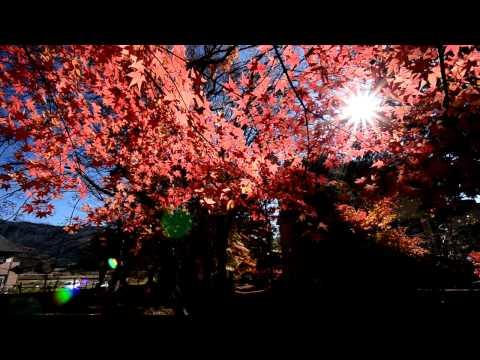 [HD] The red Maple leaves around Kawaguchiko