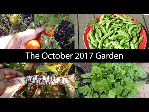 Monthly Gardening Series - October Garden Tour, Harvests & Things To Do!