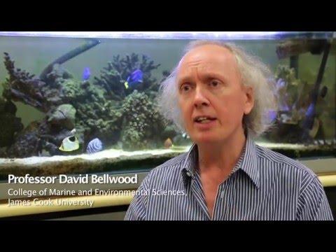 Professor David Bellwood, New Fellow of the Australian Academy of Science 2016