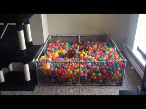 Little Dog Loves His Homemade Ball Pit