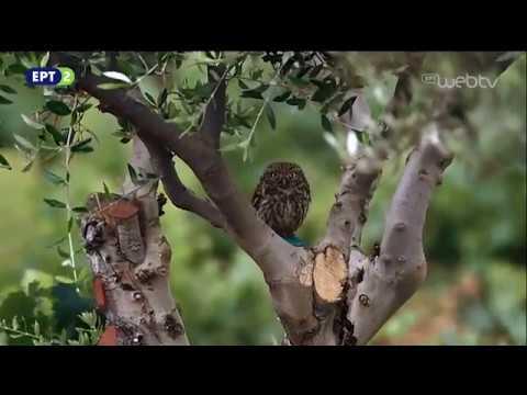 Εντός Αττικής «Βραυρώνα» 12 Απριλίου 2018