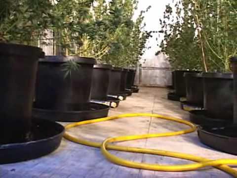 Tour this underground marijuana farm found in DeLeon Springs