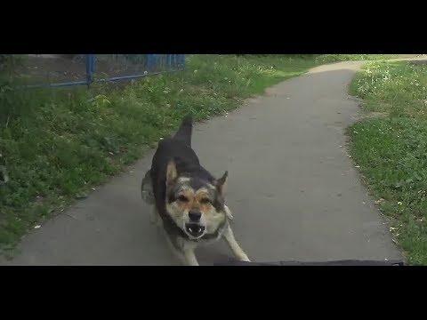 Pies potraktowany kilka razy gazem pieprzowym uczy się pokory