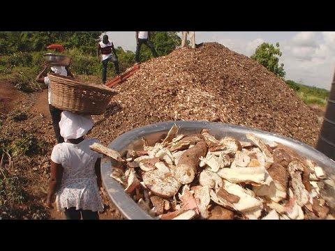 Γκάνα: Αξιοποιούν «σκουπίδια» και φτιάχνουν μανιτάρια – futuris