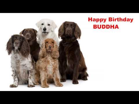 Video Buddha  Dogs Perros - Happy Birthday download in MP3, 3GP, MP4, WEBM, AVI, FLV January 2017