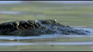 Quand un crocodile veut se faire une loutre mais que ...