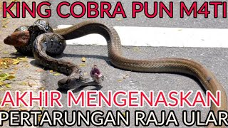 Video KING COBRA VS PYTHON BERAKHIR MENGEN4SKAN... MP3, 3GP, MP4, WEBM, AVI, FLV Juli 2019