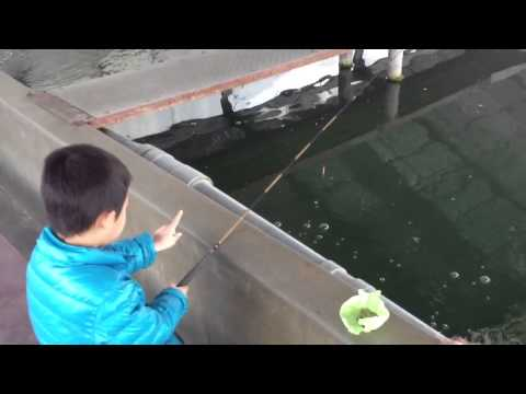 金魚の釣り堀 in大倉養鯉場 vol.1