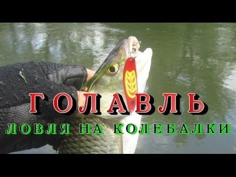 видео ловля голавля на микроколебалки видео