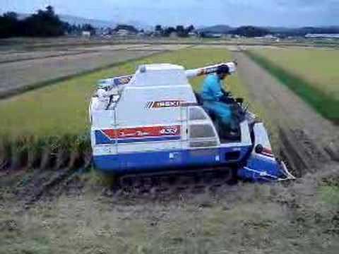 20070929 稲刈り その2
