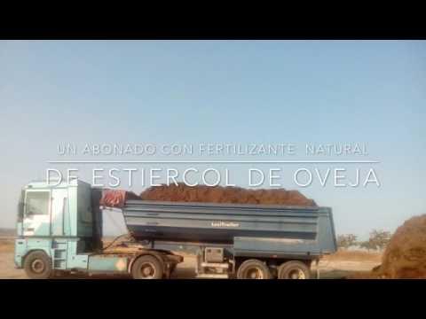 Cultivando alfalfa en Andalucía