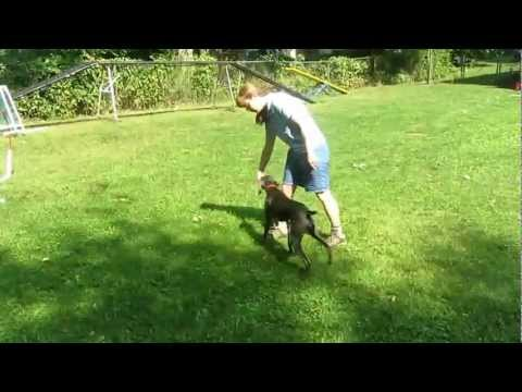 "Teaching Your Dog To ""Switch"" Or The Mechanics Of An Agility Rear Cross"