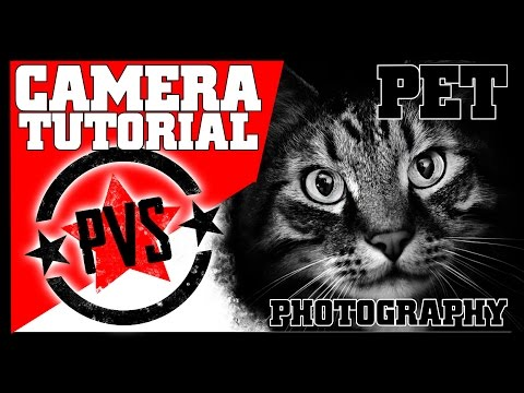 DSLR Tips: Pet Portrait Photography