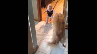 Собака учит малыша прыгать