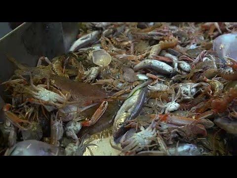 Σημαντικές αλλαγές στην κοινή πολιτική αλιείας της ΕΕ