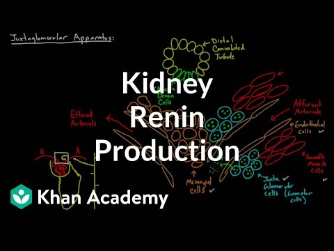 Renin Production In The Kidneys | Renal System Physiology | NCLEX-RN | Khan Academy