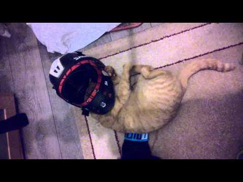 I kočky by rády hrály florbal!