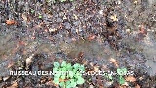 Les Loges-en-Josas France  city images : Ruisseau des Noyers - Les-Loges-en-Josas - 10/01/2016