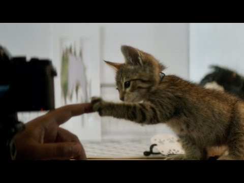 Keanu (TV Spot 'Now Playing')