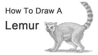 Видео: как нарисовать лемура