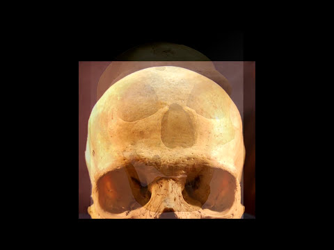 Cranial capacity and intelligence – what's the connection?