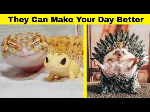 Cute Animals To Make Your Day Better