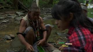 Video JEJAK PETUALANG - POHON RAKSASA KALIMANTAN DI MATA DUNIA (20/3/17) 3-2 MP3, 3GP, MP4, WEBM, AVI, FLV November 2018