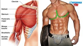 """Video How To Get The """"Outer Chest Line"""" MP3, 3GP, MP4, WEBM, AVI, FLV Maret 2019"""