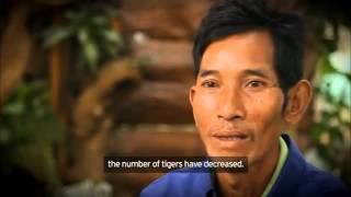 WWF: Confessions Of A Tiger Poacher