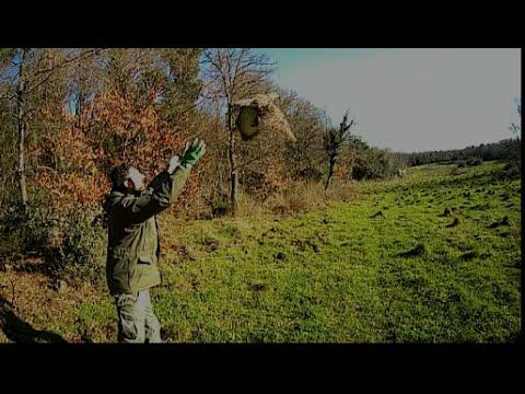 Liberazione poiana nella RNR Selva del Lamone