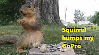 This Squirrel Eats Nuts, And Then Goes Completely Nuts