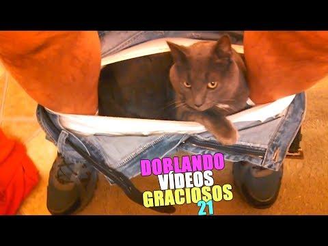 Videos graciosos - DOBLANDO VÍDEOS GRACIOSOS 21