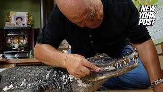 This man lovingly cuddles his alligator and brushes its teeth