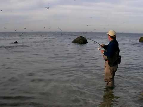 Long Island Bluefish Blitz – 2008