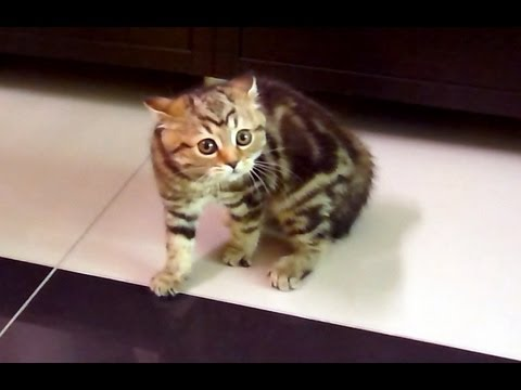Funny Cats ballet. Scary kitten dancing