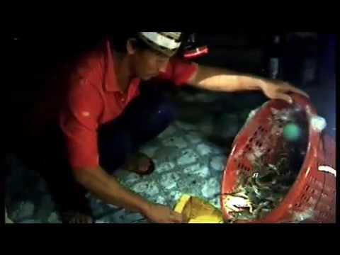 Farming Wastelands – Shrimp Farming