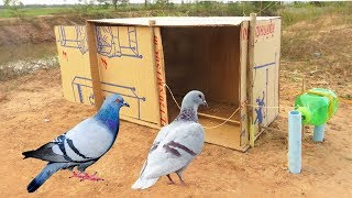 Easy Bird Trap - Simple DIY Creative Bird Trap make from water bottle N Cardboard That Work 100%