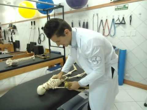 Terapia Manual Ombro (Maitland AP) Clínica de Fisioterapia Dr. Robson Sitta (11)2528.4661