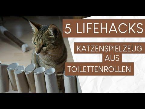 Katzenspielzeug aus Klopapierrollen basteln / 5 Hacks
