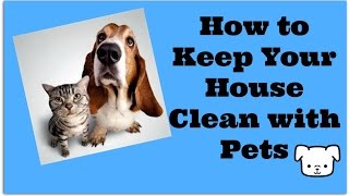 Clean Home With Pets