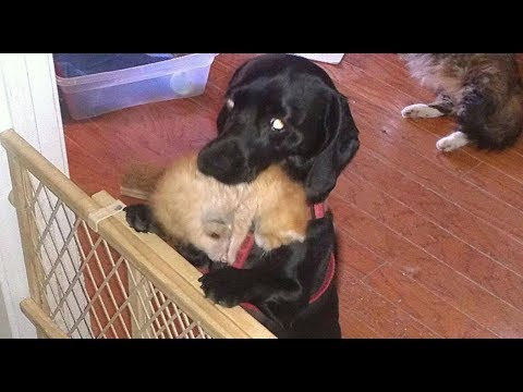 When This Cat Gave Birth To Seven Kittens, The Family Dog's Animal Instincts Took Over