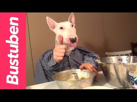bull terrier prepara il pan di spagna - divertentissimo
