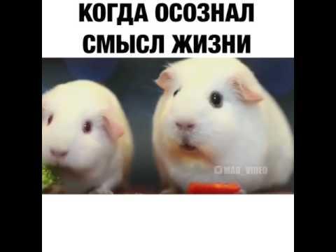 Топ 100 приколов когда осознал смысл жизни - DomaVideo.Ru
