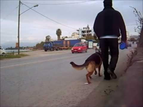 Puppy Training εκπαιδευση κουταβιου (PART 2).wmv