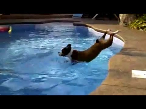 Funny Dogs – Hilarious Pool Fail Compilation!